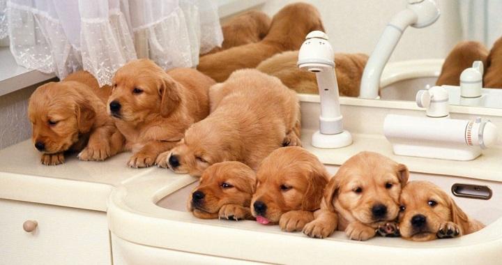 Cachorros en el baño