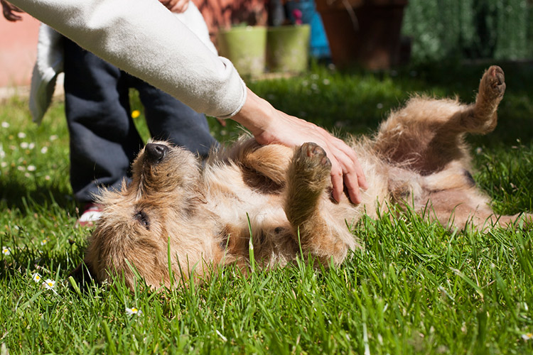 cosquillas perros