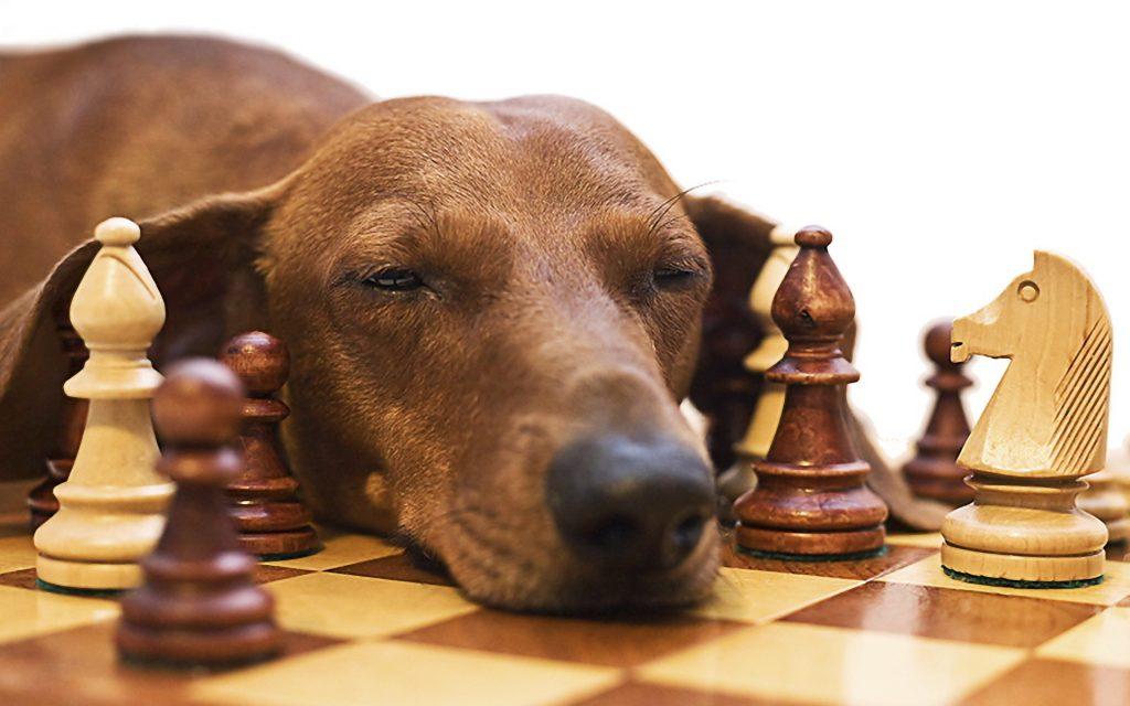 perro ajedrez
