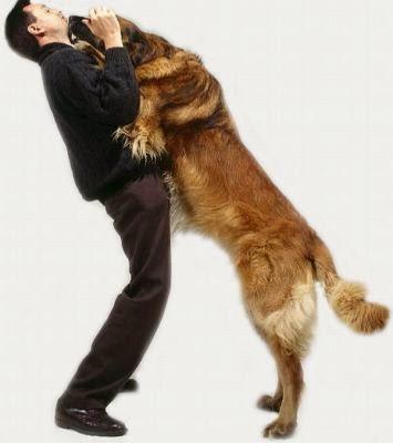 perro saltando sobre persona
