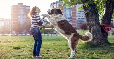 perro saludando persona
