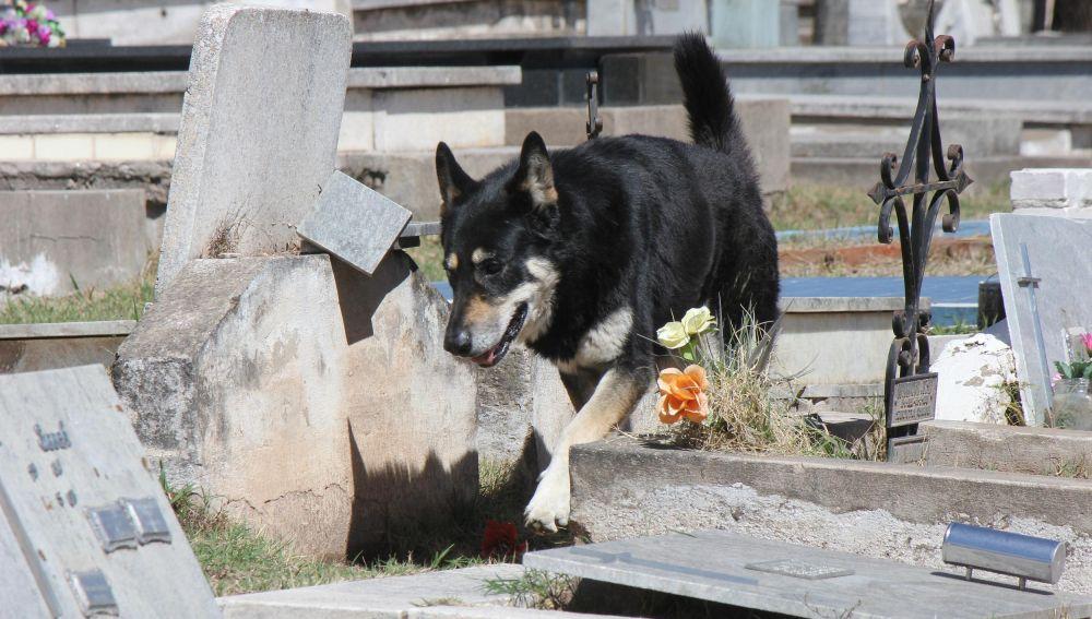 perro en la tumba de su dueño