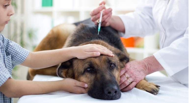 perro vacunandose
