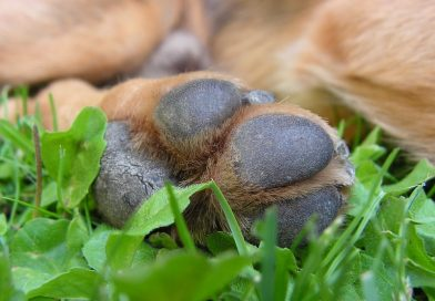 almohadilla de perro