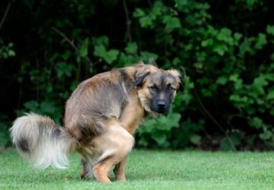 perro-haciendo-caca