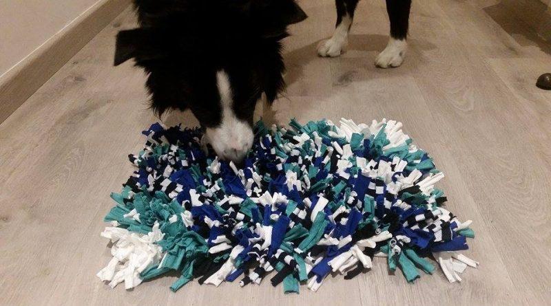 Alfombra olfativa para perros
