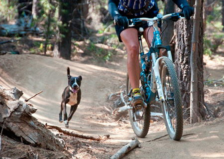 perro-persiguiendo-bicicleta
