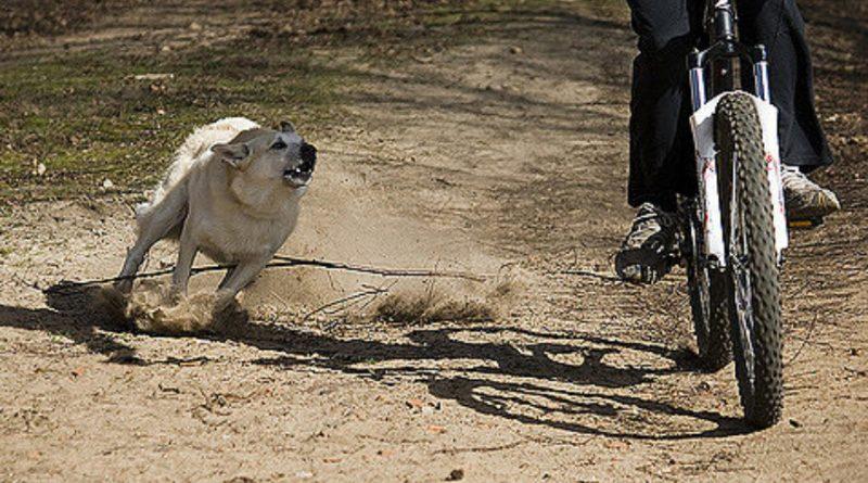 perro-persigue-bicicleta