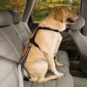 perro-viajando-en-coche