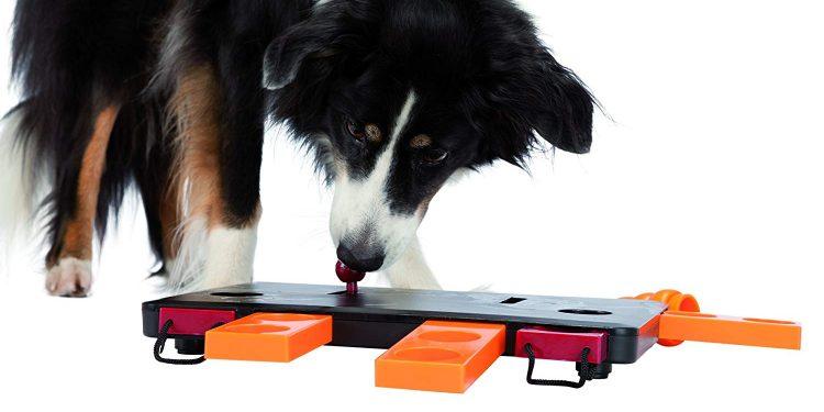 juguete-inteligencia-perro