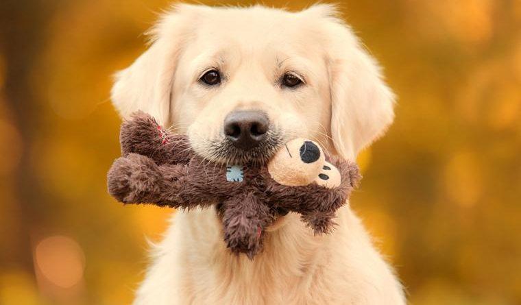 perro-con-juguete