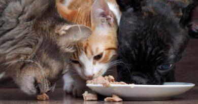 gatos-y-perros-comiendo