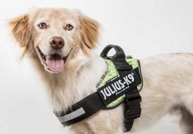 Arnés Julius-k9 IDC, uno de los mejores arneses para perros del 2020