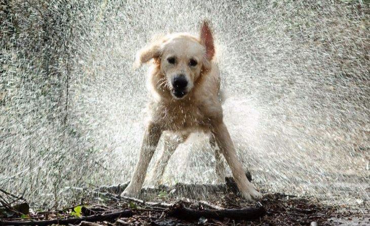 perro-lluvia