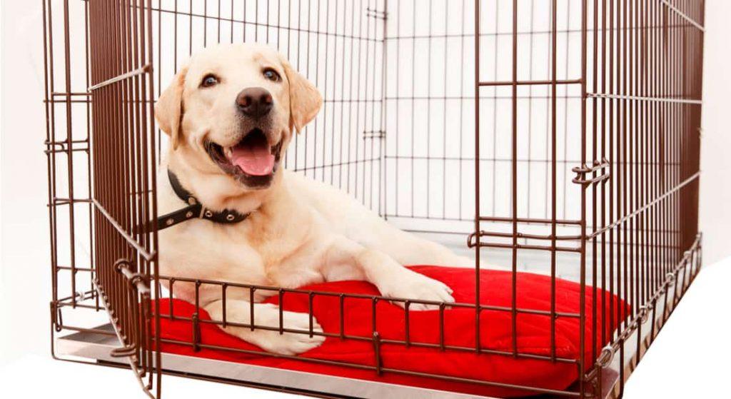 jaula-para-perros