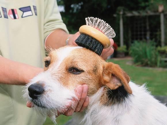 como-cepillar-perro
