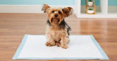 Cómo-enseñar-a-un-perro-a-hacer-sus-necesidades-fuera-de-casa