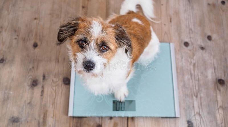 bascula-perro