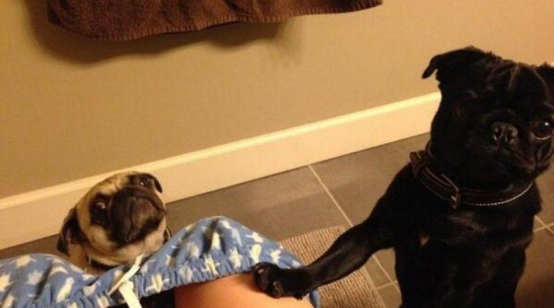 perro-en-el-baño