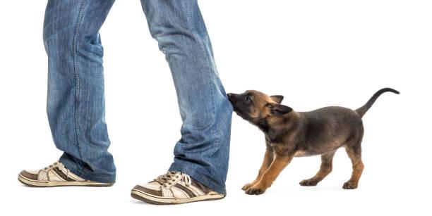 perro-mordiendo-pies