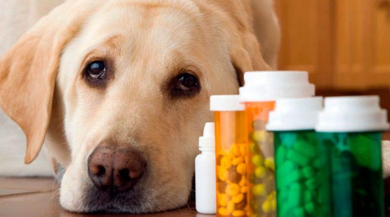 medicamentos-toxicos-para-perros