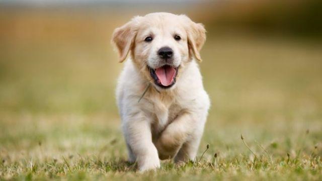 cachorro-emocionado