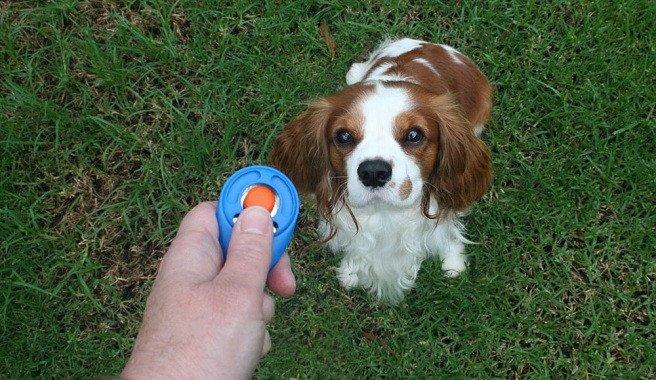 entrenamiento-con-clicker