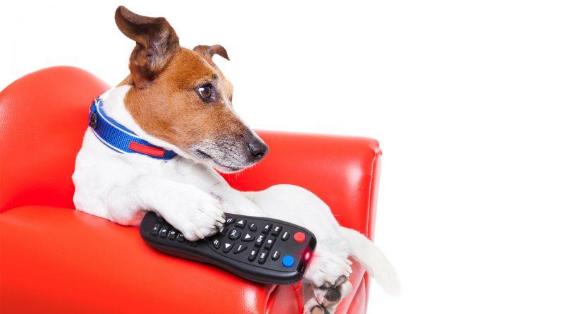 perro-viendo-television