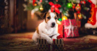 regalos-para-perro-por-navidad